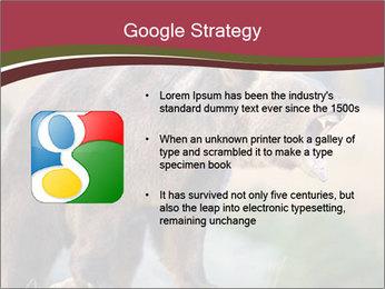 Brown Bear PowerPoint Templates - Slide 10