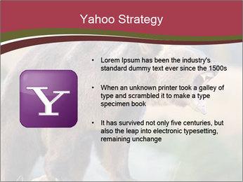 Brown Bear PowerPoint Templates - Slide 11