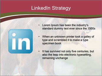 Brown Bear PowerPoint Templates - Slide 12
