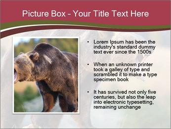 Brown Bear PowerPoint Templates - Slide 13