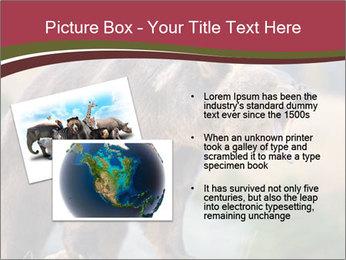 Brown Bear PowerPoint Templates - Slide 20