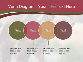 Brown Bear PowerPoint Templates - Slide 32