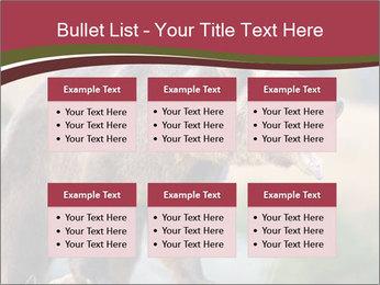 Brown Bear PowerPoint Templates - Slide 56