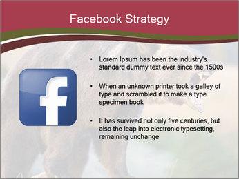 Brown Bear PowerPoint Templates - Slide 6