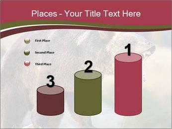 Brown Bear PowerPoint Templates - Slide 65
