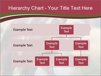 Brown Bear PowerPoint Templates - Slide 67
