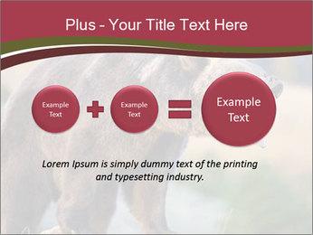 Brown Bear PowerPoint Templates - Slide 75