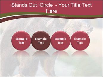 Brown Bear PowerPoint Templates - Slide 76