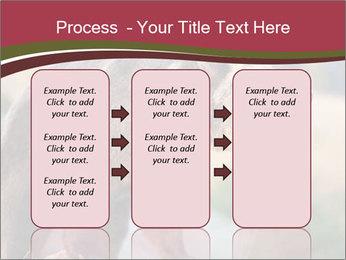 Brown Bear PowerPoint Templates - Slide 86