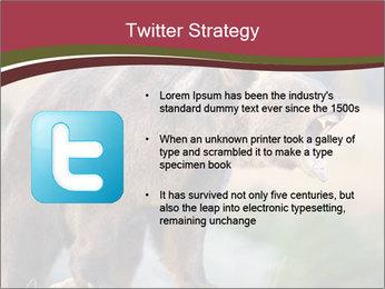 Brown Bear PowerPoint Templates - Slide 9