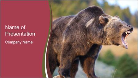 Brown Bear PowerPoint Template