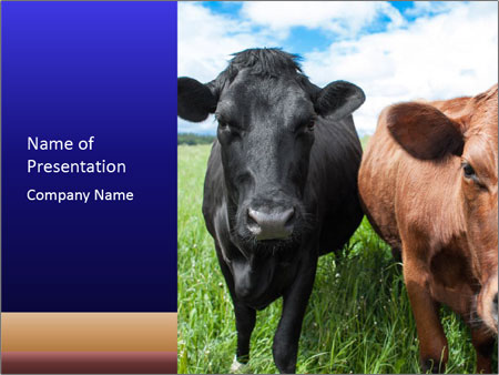Two cows in the field PowerPoint Template