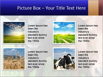 Two cows in the field PowerPoint Template - Slide 14