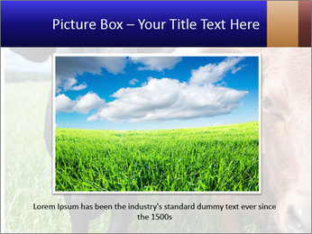 Two cows in the field PowerPoint Template - Slide 15