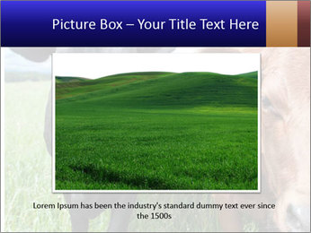 Two cows in the field PowerPoint Template - Slide 16