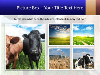Two cows in the field PowerPoint Template - Slide 19