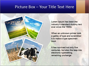 Two cows in the field PowerPoint Template - Slide 23