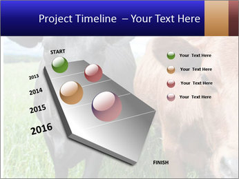 Two cows in the field PowerPoint Template - Slide 26