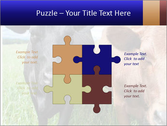 Two cows in the field PowerPoint Template - Slide 43