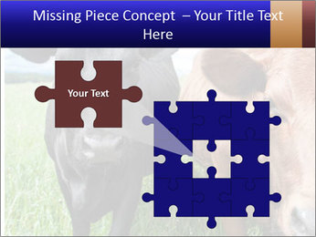 Two cows in the field PowerPoint Template - Slide 45