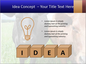 Two cows in the field PowerPoint Template - Slide 80