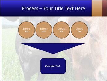 Two cows in the field PowerPoint Template - Slide 93