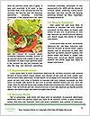 0000093411 Word Templates - Page 4