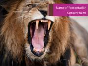 Angry roaring lion PowerPoint Template