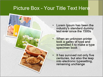 Stevia leaves PowerPoint Templates - Slide 17