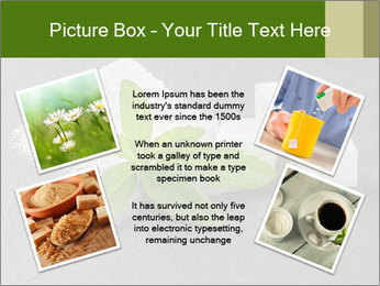 Stevia leaves PowerPoint Templates - Slide 24