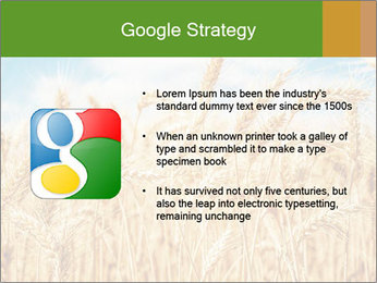 Gold wheat PowerPoint Templates - Slide 10