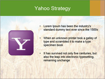 Gold wheat PowerPoint Templates - Slide 11