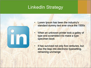 Gold wheat PowerPoint Templates - Slide 12