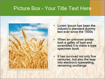 Gold wheat PowerPoint Templates - Slide 13