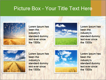 Gold wheat PowerPoint Templates - Slide 14