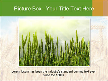Gold wheat PowerPoint Templates - Slide 16