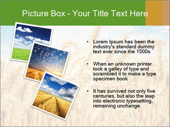 Gold wheat PowerPoint Templates - Slide 17