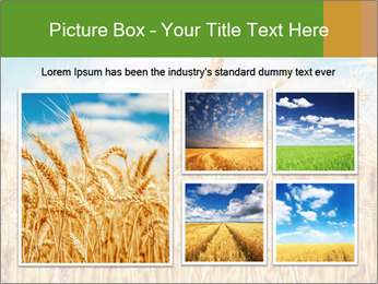 Gold wheat PowerPoint Templates - Slide 19