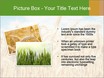Gold wheat PowerPoint Templates - Slide 20