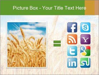 Gold wheat PowerPoint Templates - Slide 21