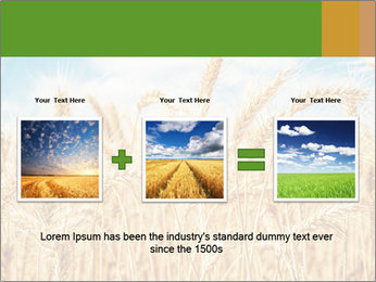 Gold wheat PowerPoint Templates - Slide 22