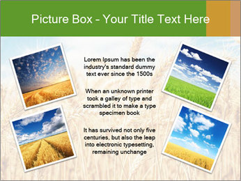 Gold wheat PowerPoint Templates - Slide 24