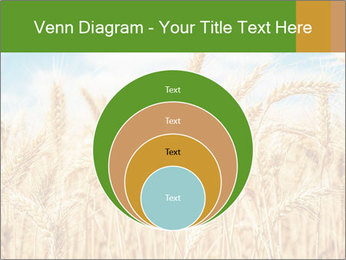 Gold wheat PowerPoint Templates - Slide 34