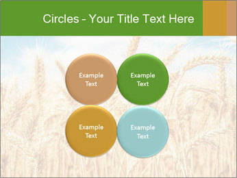 Gold wheat PowerPoint Templates - Slide 38