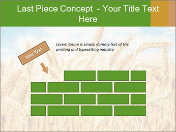 Gold wheat PowerPoint Templates - Slide 46