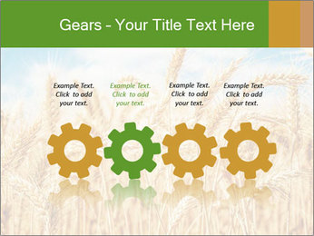 Gold wheat PowerPoint Templates - Slide 48