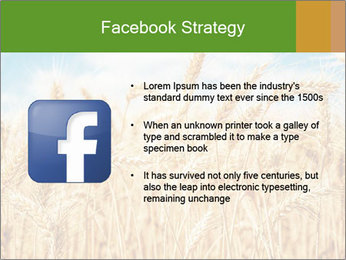 Gold wheat PowerPoint Templates - Slide 6