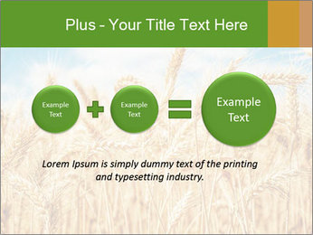Gold wheat PowerPoint Templates - Slide 75