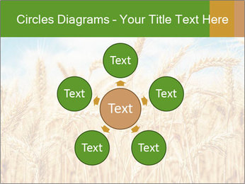 Gold wheat PowerPoint Templates - Slide 78