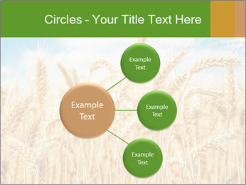 Gold wheat PowerPoint Templates - Slide 79